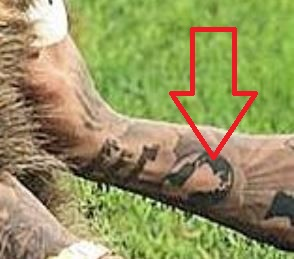 Nathaneil globe Tattoo-