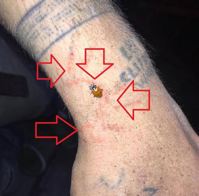 Cole Mohr-Tattoo-Left-Wrist